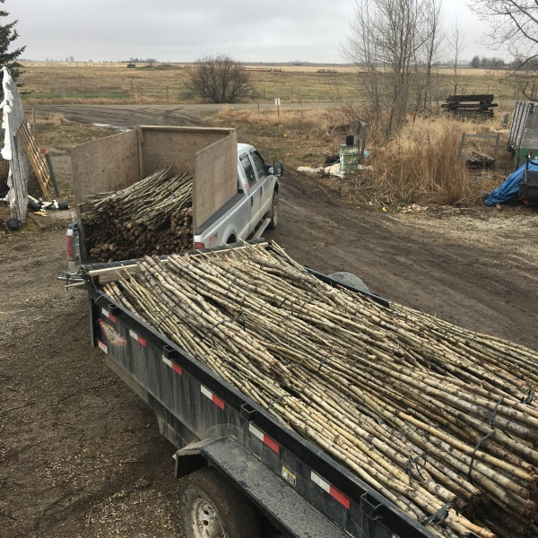 Poplar pole supply