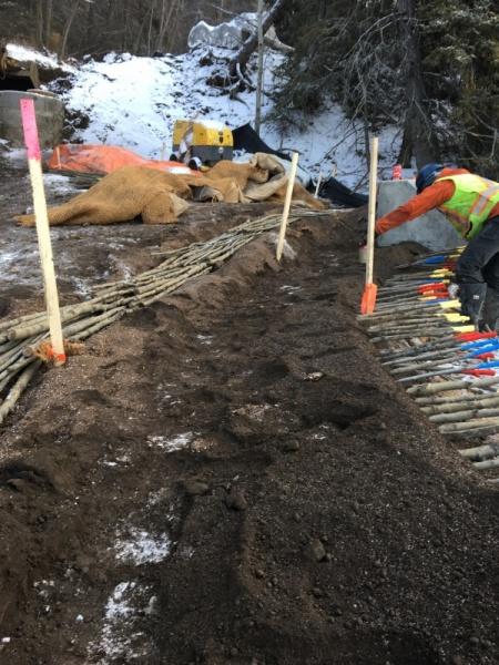 Outfall restoration, Edmonton AB