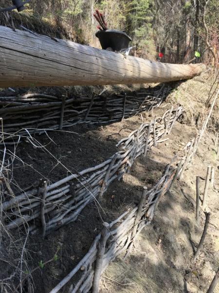 Wattle fence, Devon AB