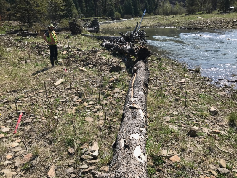 Trail rehabilitation, Rocky Mountain House, AB