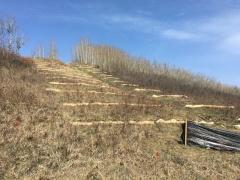 Slope stability project, Tuscany Ravine, Calgary AB