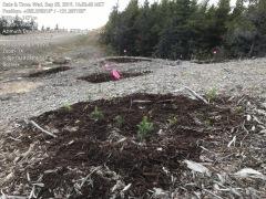 Boralex wind farm restoration project, Chetwynd BC