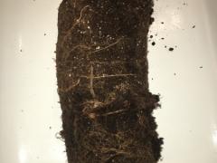 Sandbar soil