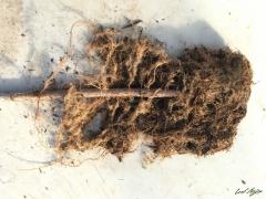 Sandbar washed rooted 2