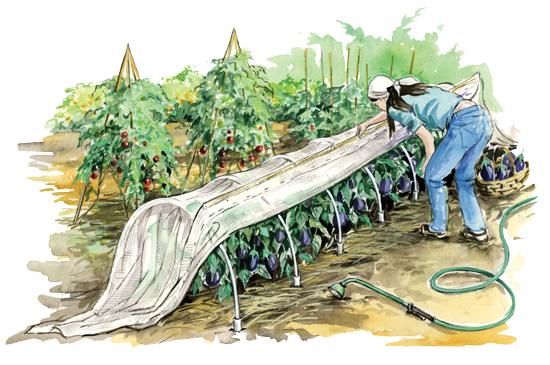 Low hoop house season extension , calgary leaf ninjas, calgary gardening, calgary telus spark