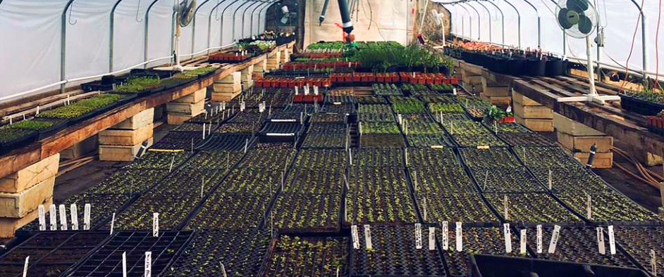 edible plants greenhouse